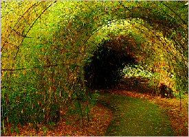 Tours san jos orosi valley and lankester gardens for Jardin lankester